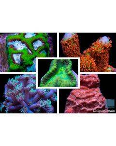 Mixed Live Coral Pack