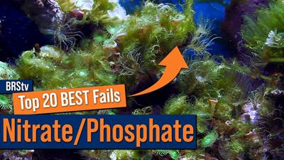 BRStv Top 20 Best Fails - Nitrate and Phosphate - Video - Watch Now
