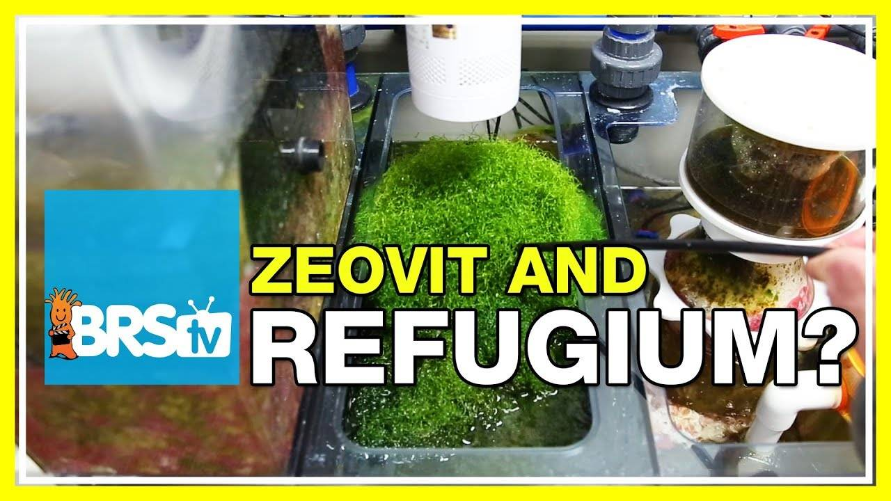 FAQ #17: Is it worth running a refugium on a Zeovit tank? | 52 FAQ
