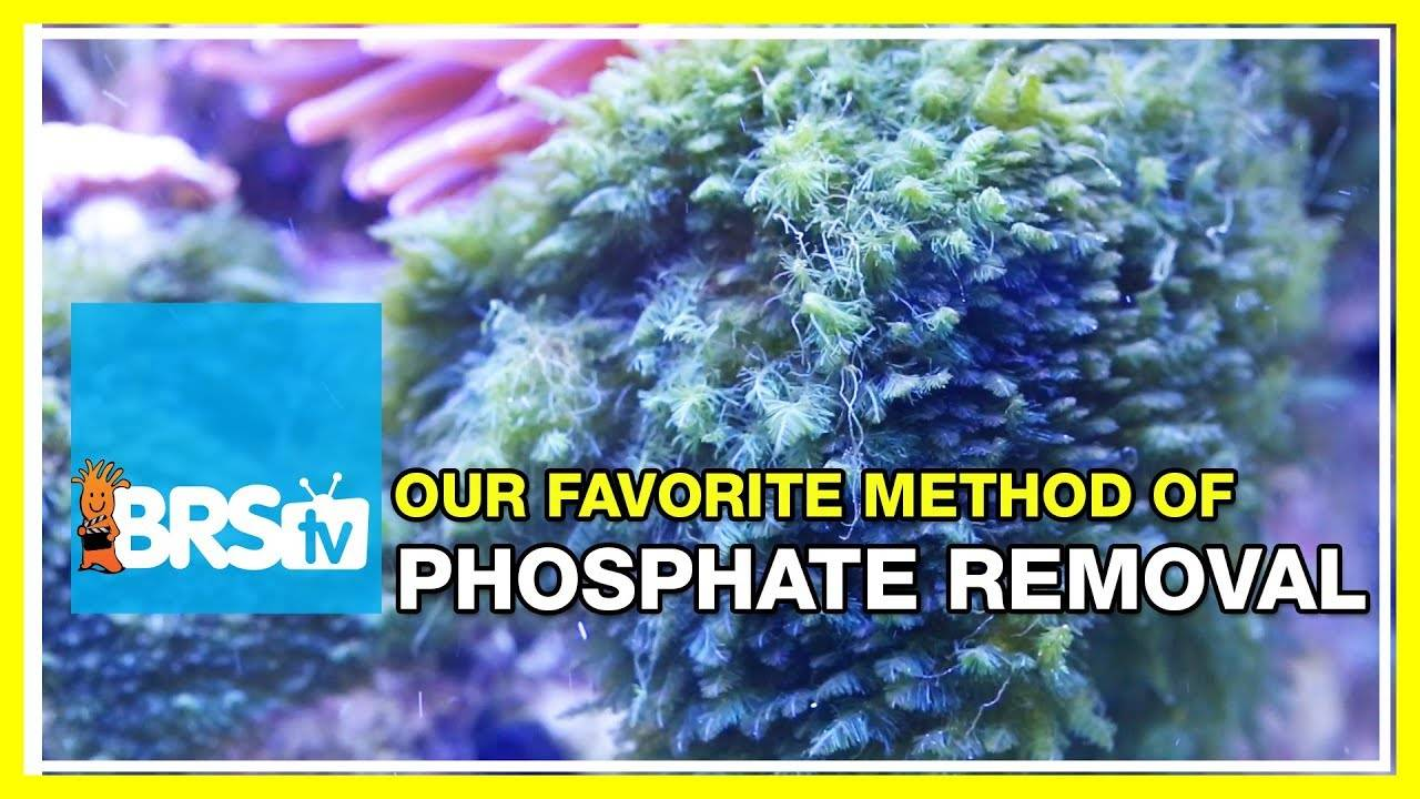 What are some great ways to reduce phosphates in the reef aquarium?   52 FAQ