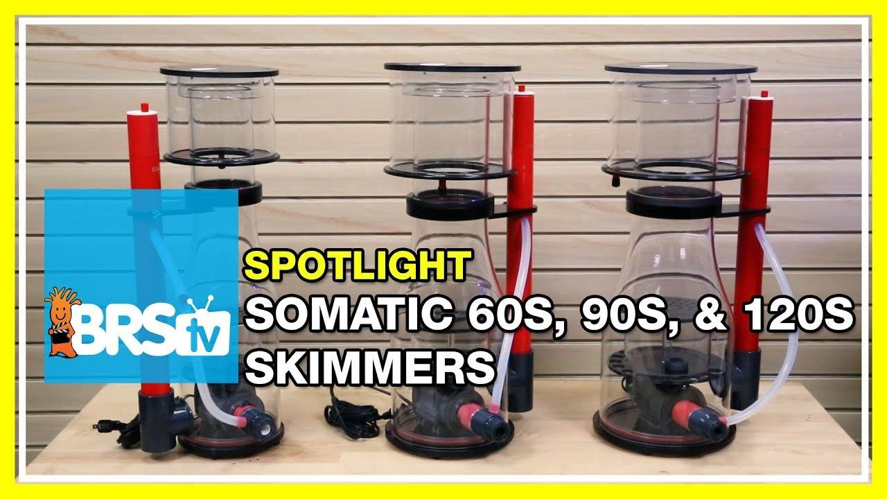 Adding a Somatic Protein Skimmer to your reef tank - BRStv