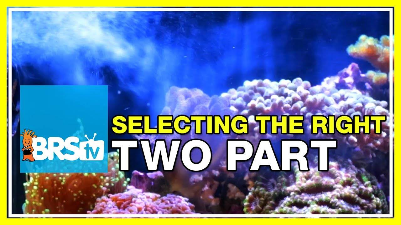Selecting the right 2-part system for your aquarium - BRStv Reef Gear Guide