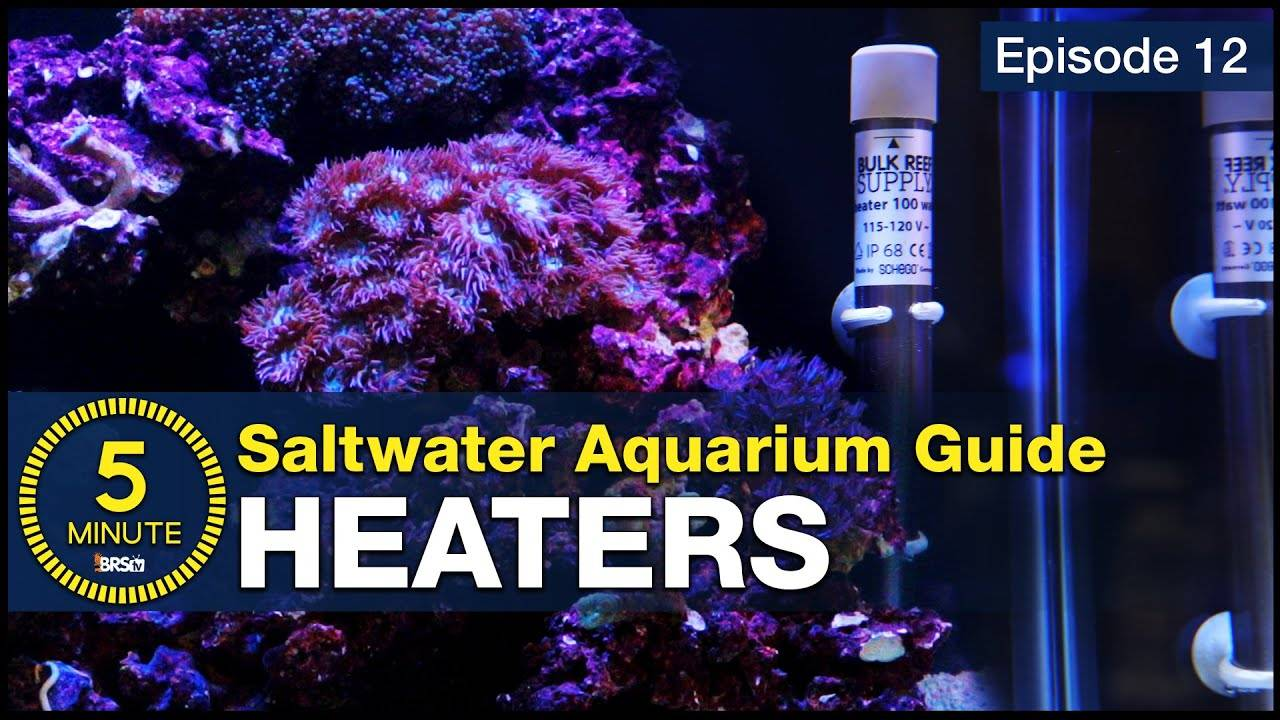 You dont have to learn the hard way... Heaters and Temperature Setup for a Reef Aquarium