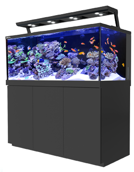 Red Sea Max Aquariums: Which Tank is Right For You?