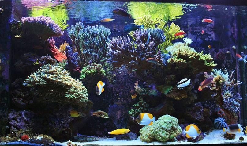 The amazing reef aquarium of Bradley J. Syphus