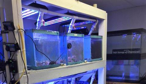 """Connecticut High School Oceanography Students Put An """"Algae Reactor"""" To The Test"""