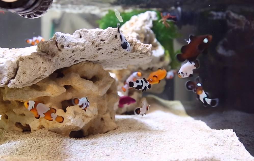 Innovative Marine NUVO-EXT Aquarium