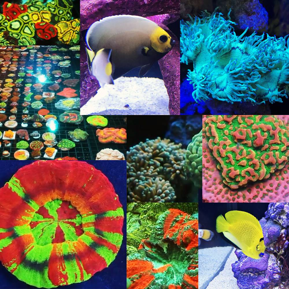 Reef-A-Palooza Roundup: A Water Testing Robot, Apex Control with Alexa, More Natural Rock Shapes, and Speaker Recaps