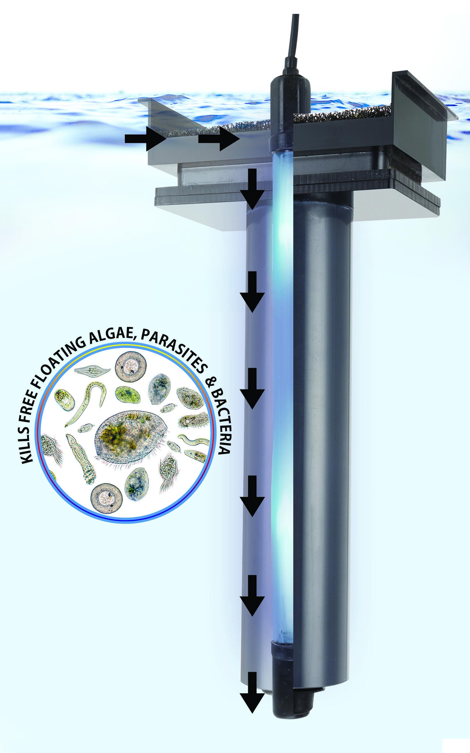 AUQA Shield MidSize UV