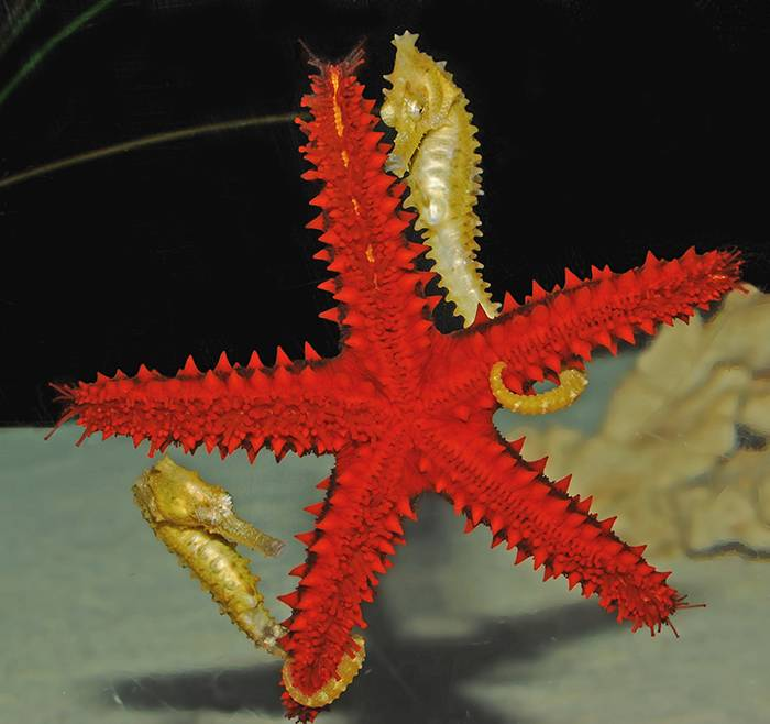 Secrets For Success: Rules You Should Follow To Keep Your Seahorse Aquarium Thriving