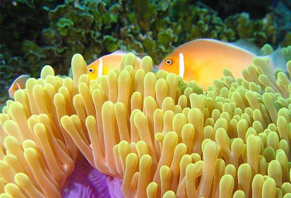Salinity Measurements in Aquariums