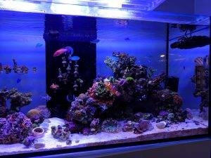 Turn Your ATO Reservoir Into A Refugium And 4 Other Easy Mods For Your Red Sea Reefer 350