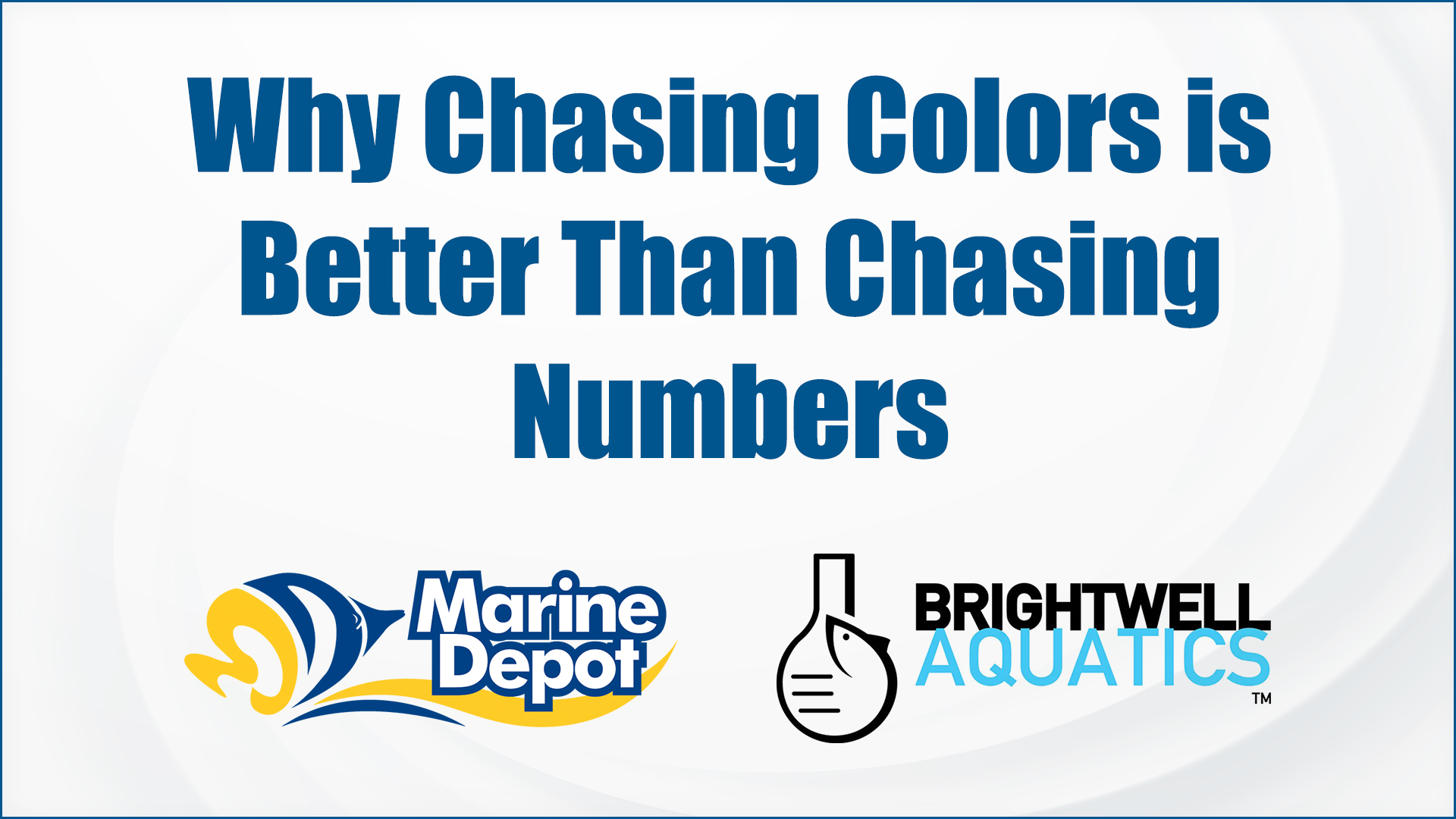 Why Chasing Colors is Better Than Chasing Numbers – Marine Depot Chats with Experts #9