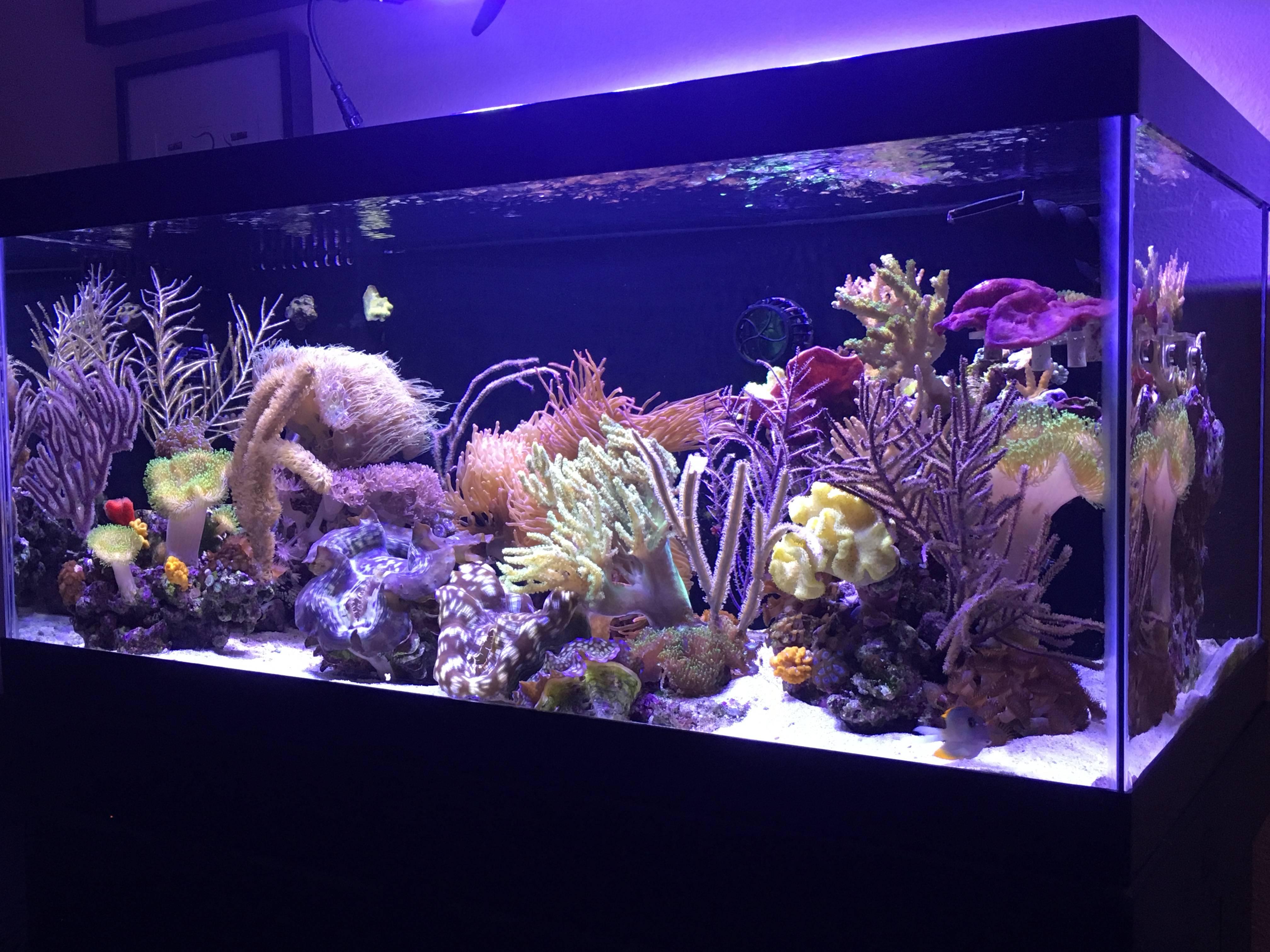 Felicia's 40 Gallon Breeder Mixed Reef Predator Tank