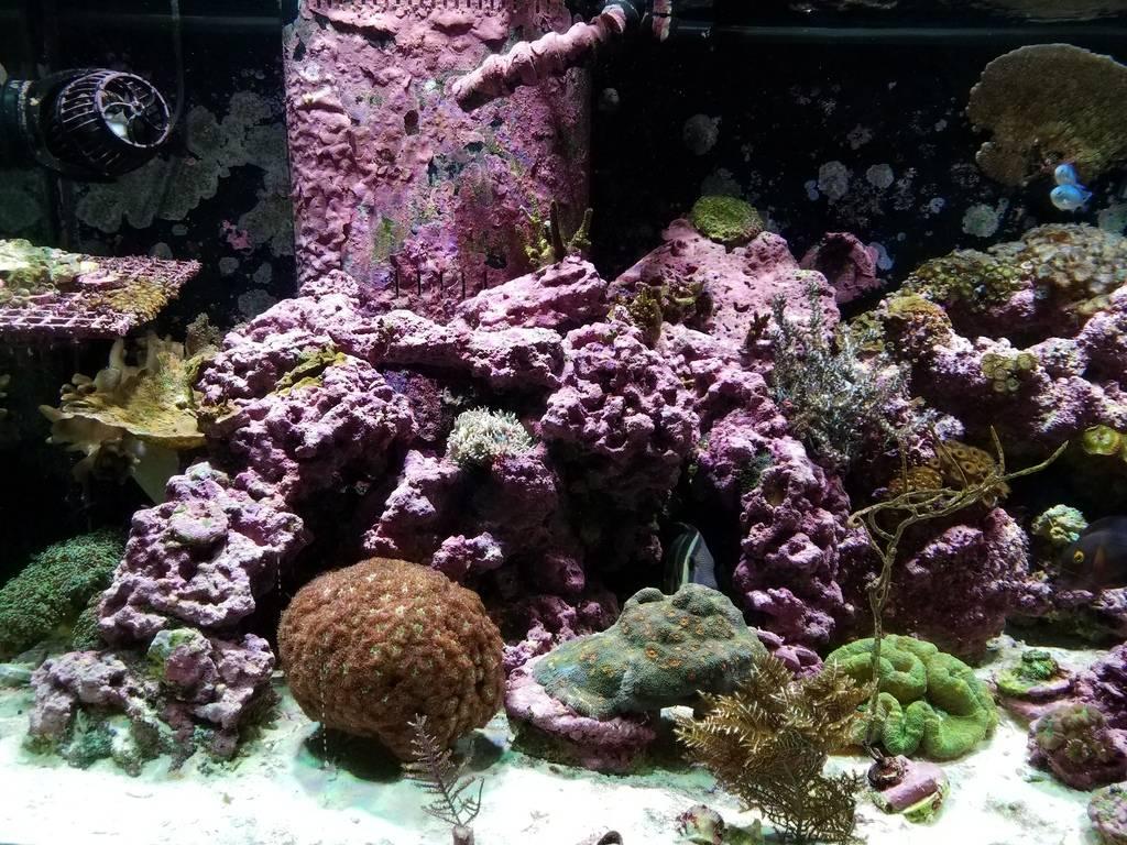 Photo by slivacki at Reef2Reef