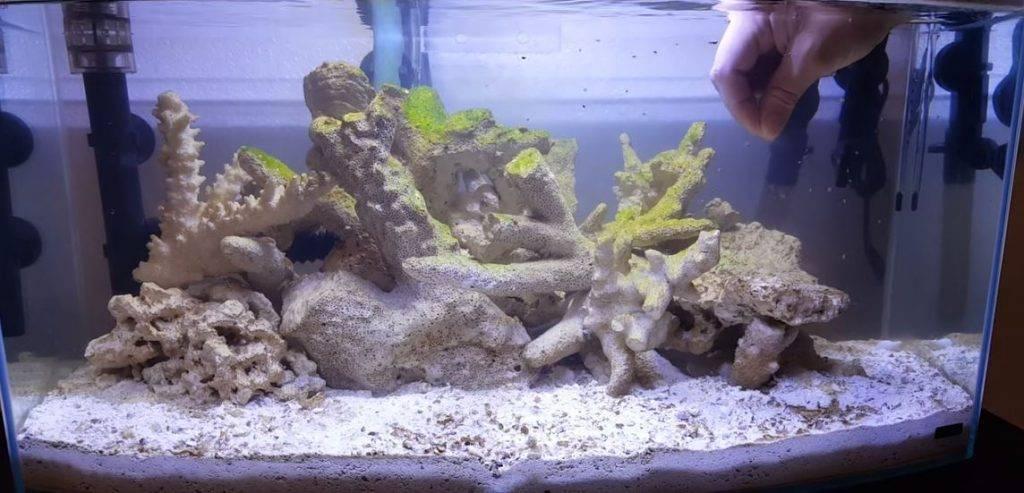 Phantom feeding a new aquarium during the cycle.