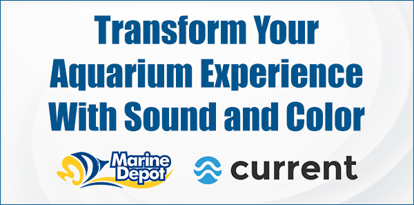 Transform Your Aquarium Experience with Sound and Color — Marine Depot Chats with Experts #11