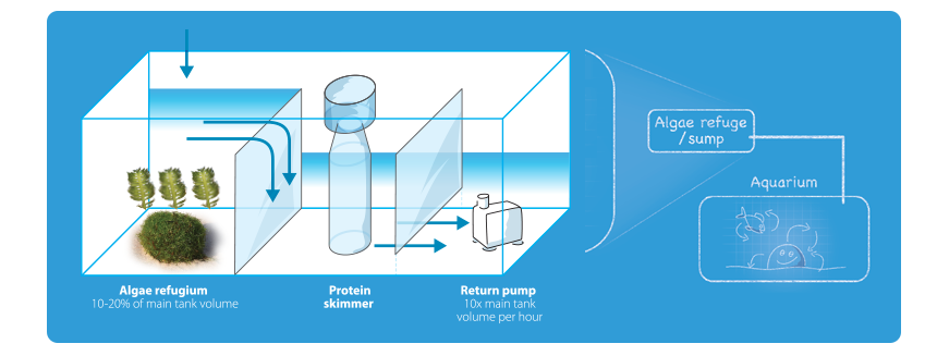 the-triton-method-algae-refugium