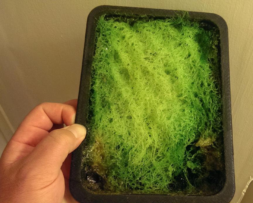 Algae Scrubber