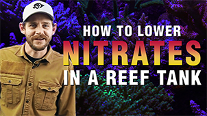 How to Lower Nitrates in a Saltwater Aquarium: Proven Techniques For Success