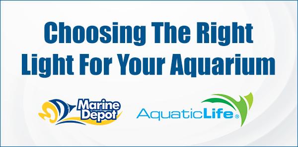 Dave Troop Aquatic Life
