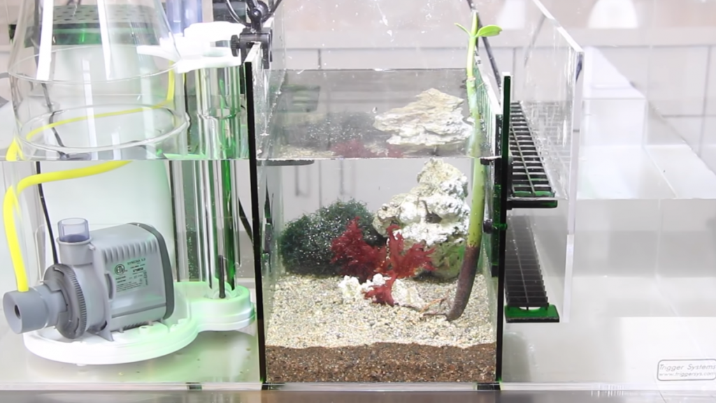 Refugium with Mineral Mud Substrate