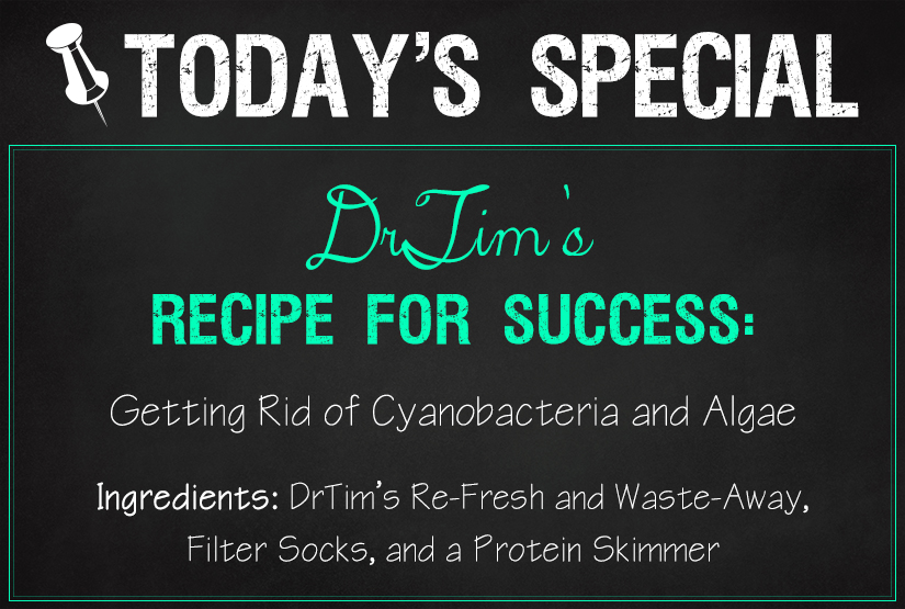 DrTims Cyano and Algae Recipe Waste-Away Re-Fresh