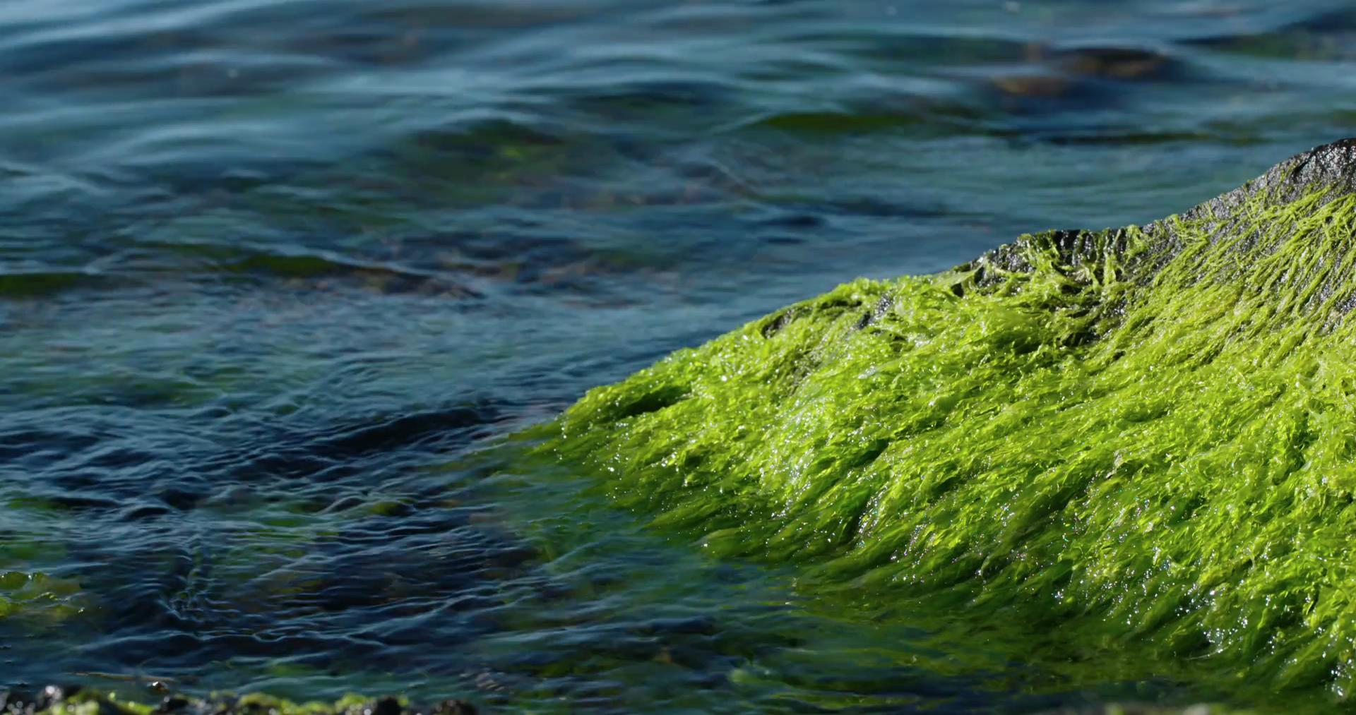 ocean waves crashing on algae covered rocks
