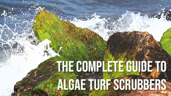 The Complete Guide to Algae Turf Scrubbers: Part 1