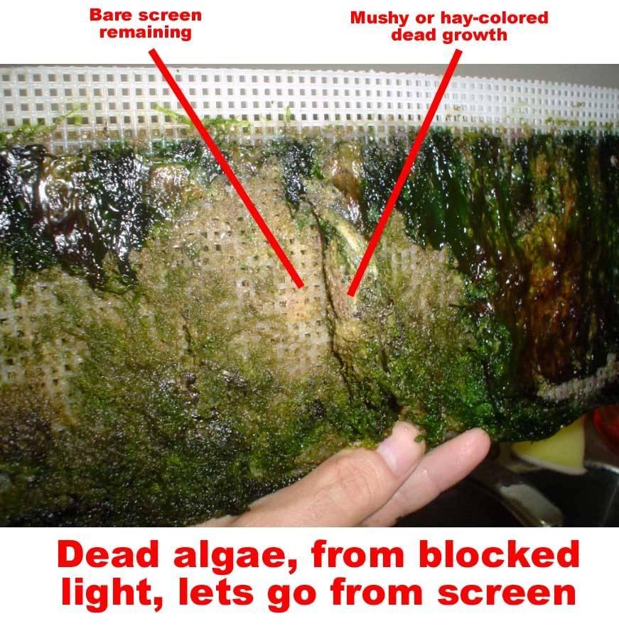Dead Algae Scrubber