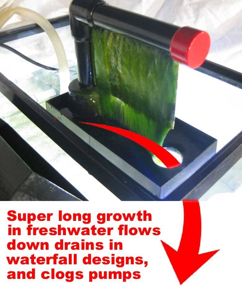 freshwater algae scrubber
