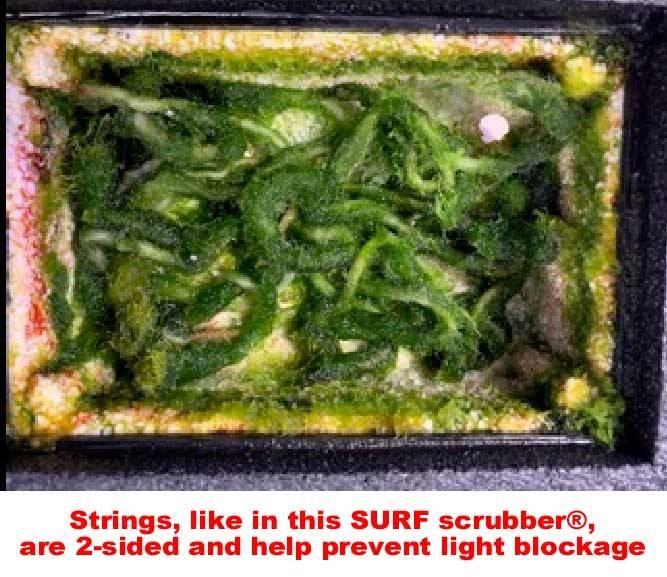 strings algae scrubber
