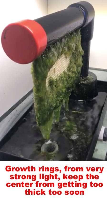 growth rings algae scrubber