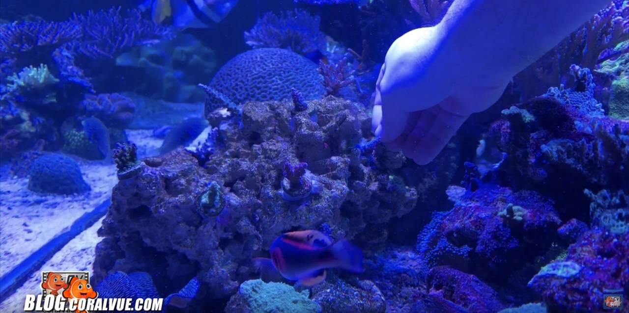 Adhering frag plug to rock under water