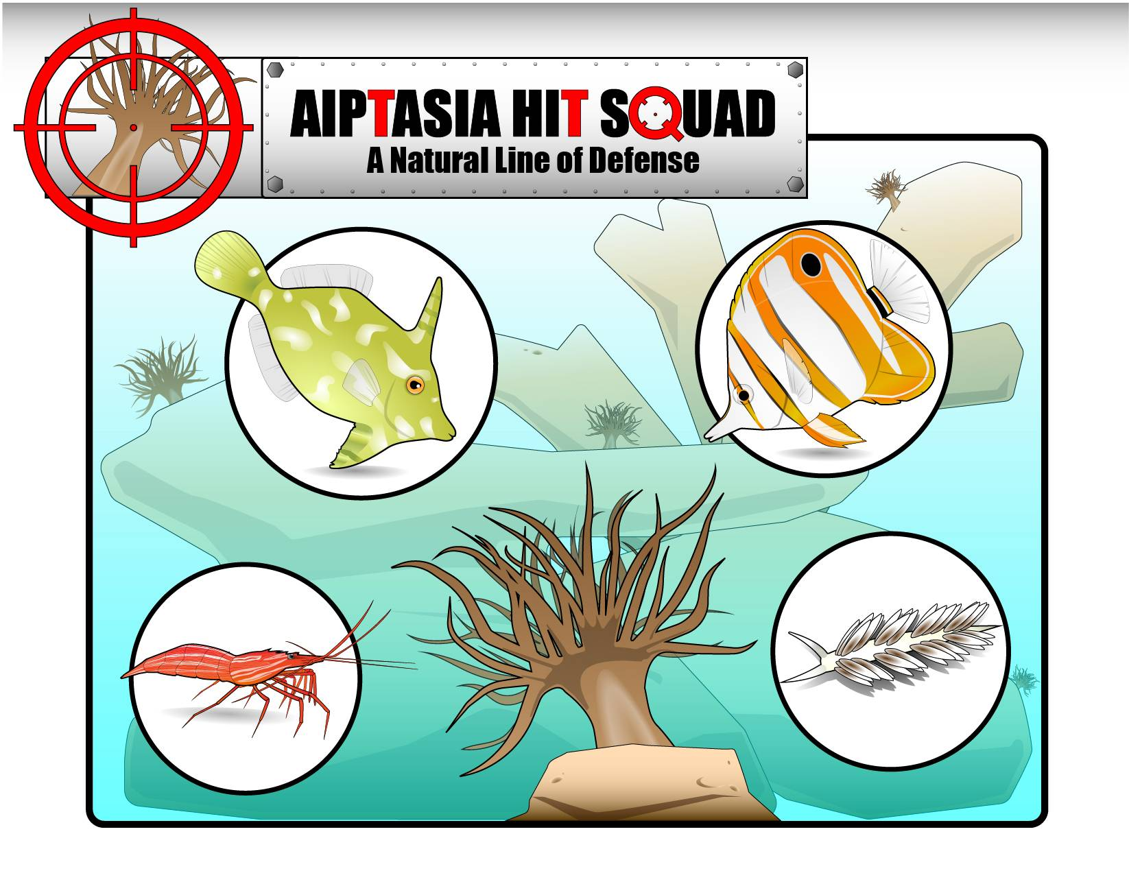 How to Eliminate Aiptasia Naturally: The Aiptasia Hit Squad