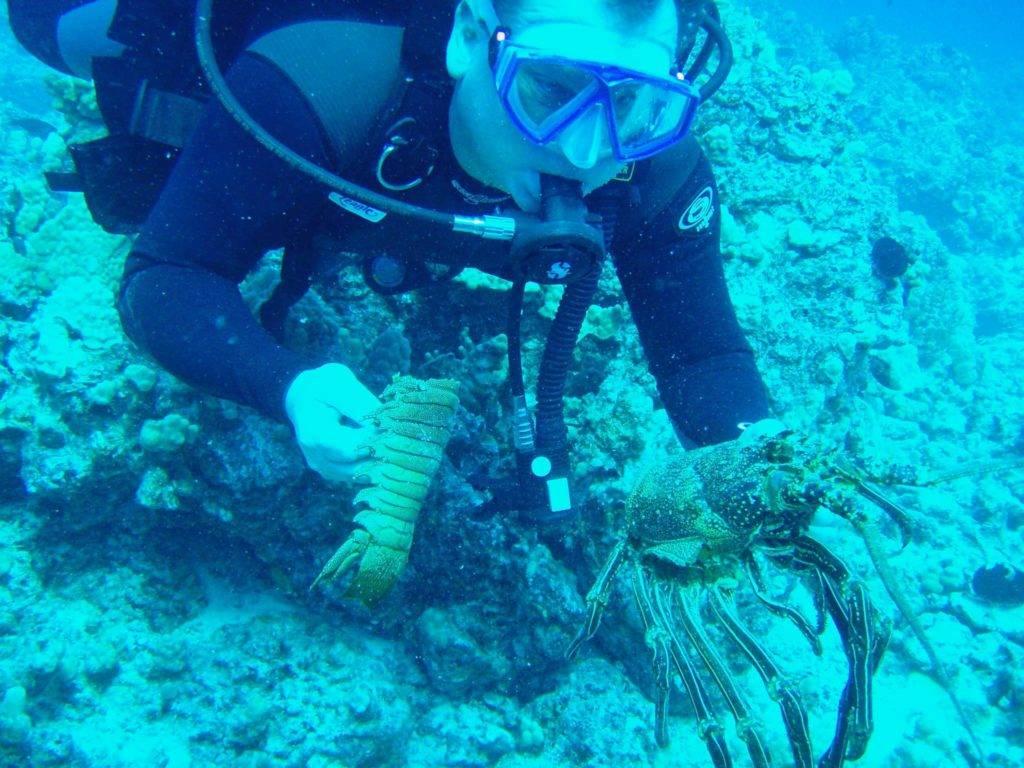 Bob Fenner diving