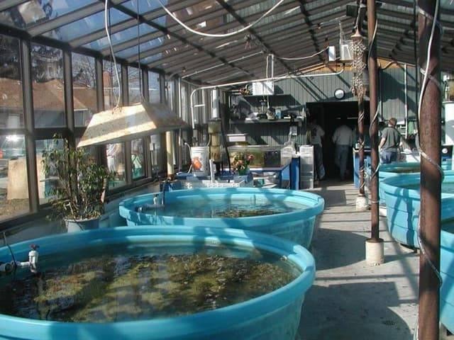 joy meadows harbor aquatics green house
