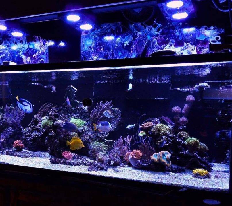 Lori Johnson reef
