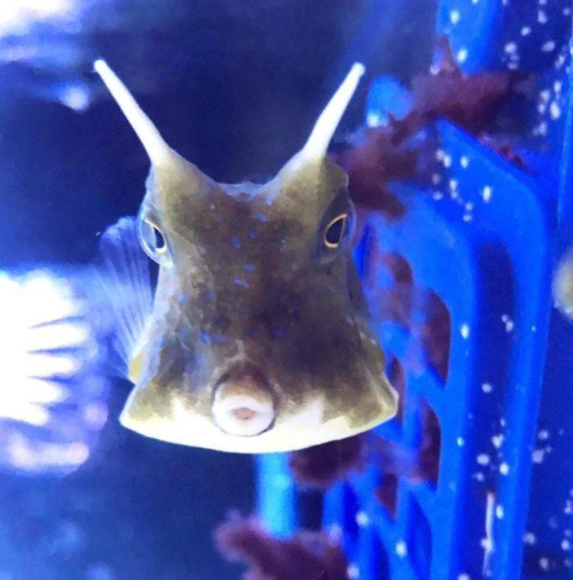 rachel fogle bevo cowfish