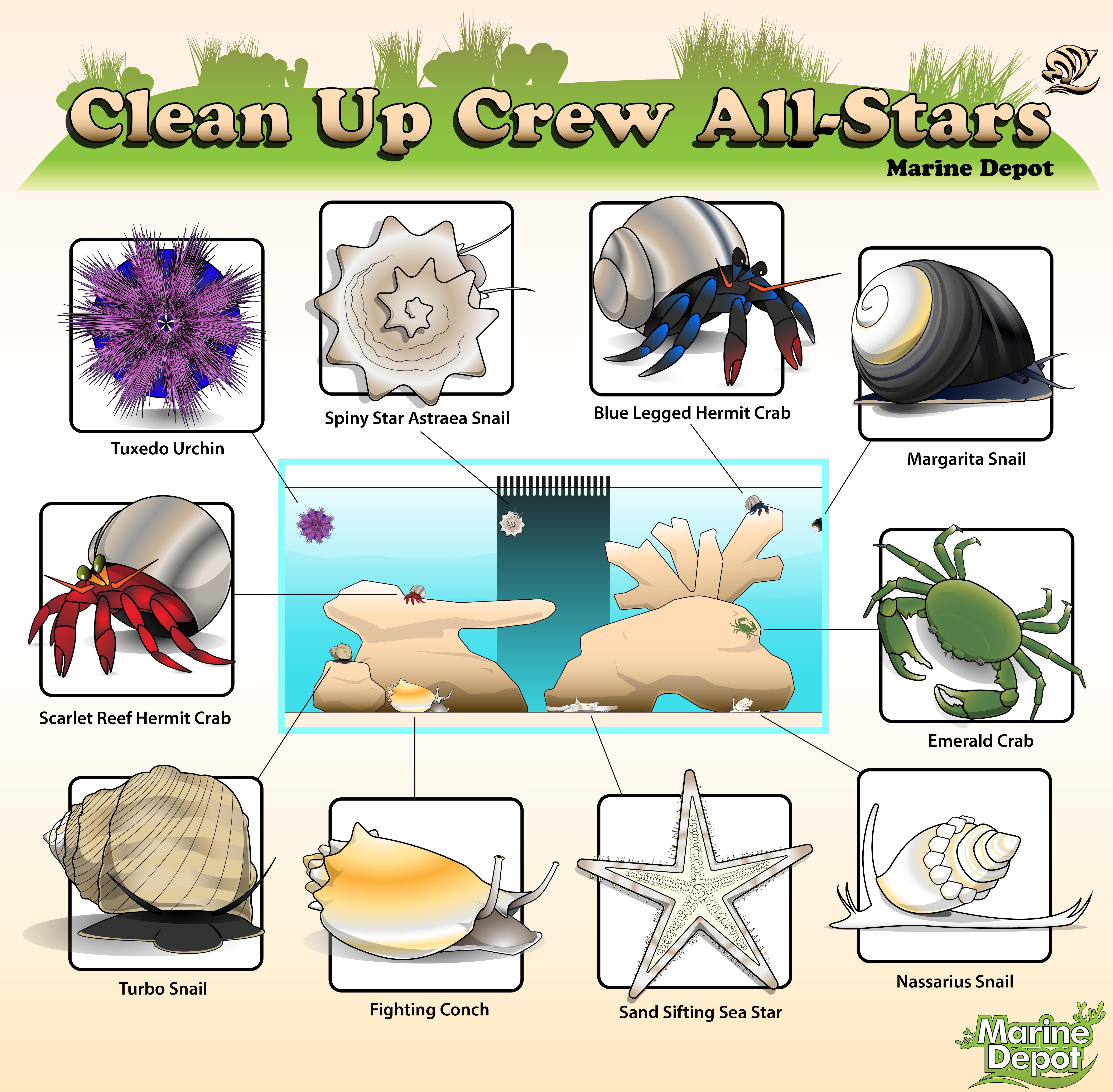 Cleanup Crew Allstars Part 1: Invertebrates