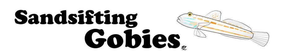 Sandsifting Gobies