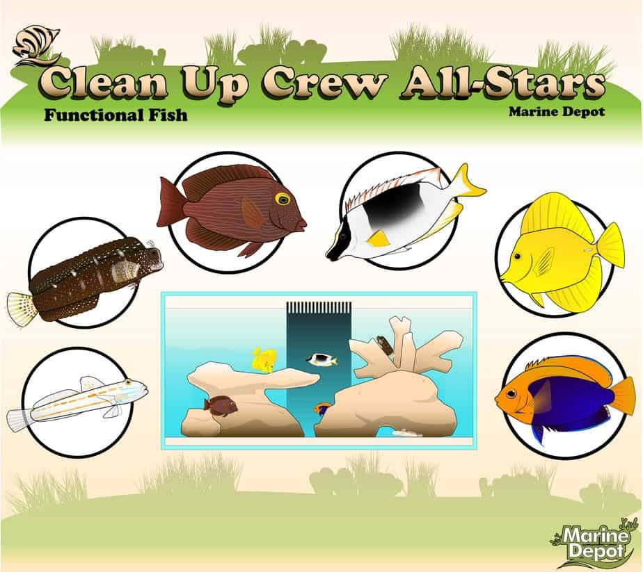 Clean Up Crew Allstars Part 2: Functional Fish