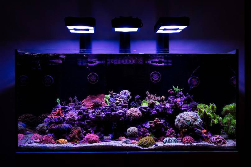 tran phan reef