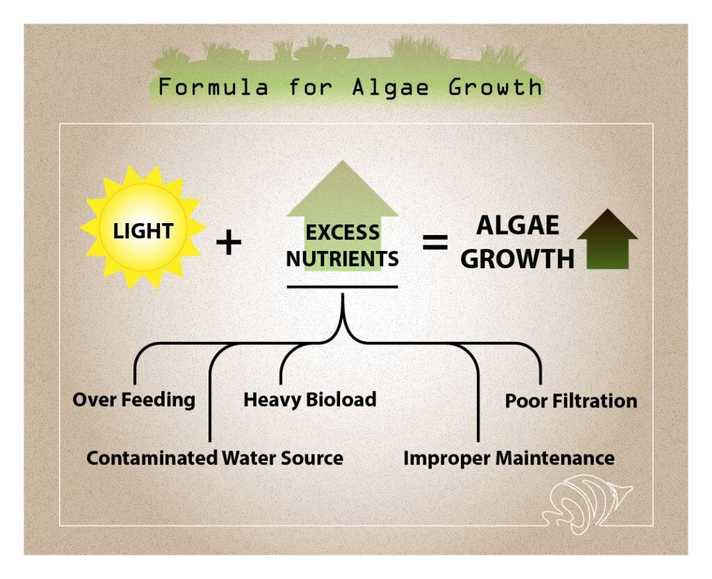 Formula for Algae Growth