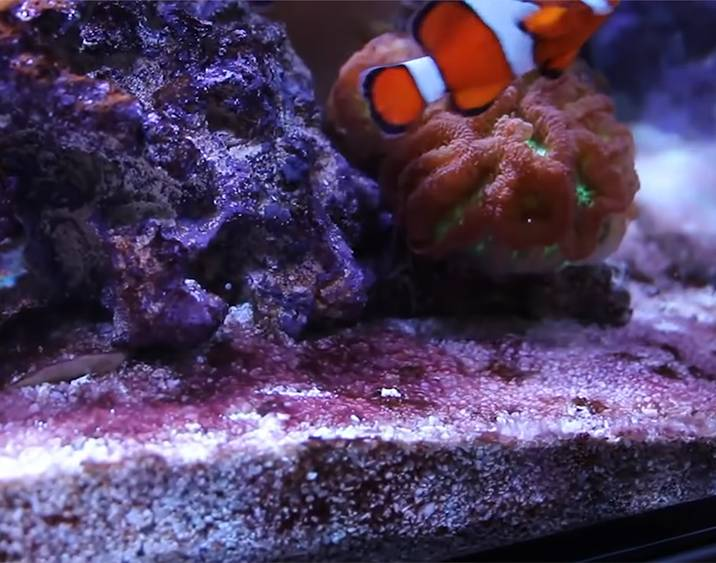 How to Prevent Red Slime in a Saltwater Aquarium