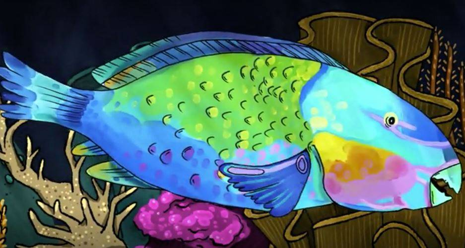 Video: Watch how Parrotfish protect coral reefs