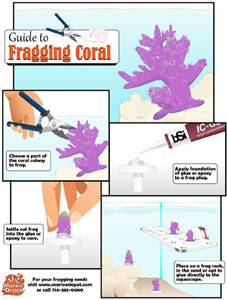 How to Frag and Mount Coral