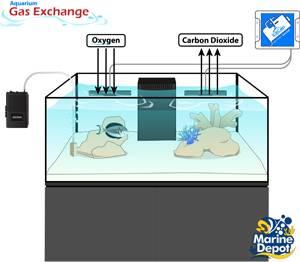Plan Ahead for Aquarium Emergencies