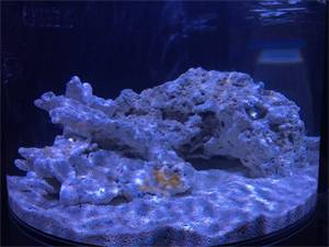 Live Rock and Sand: How Much is Right for Your Tank?