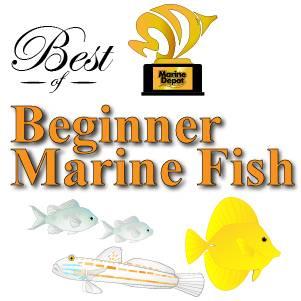 The Best Saltwater Aquarium Fish For Beginners:
